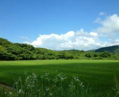 生産緑地指定を受けた田畑