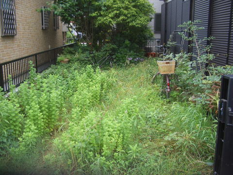 夏の季節の空き家の実家の雑草対策は除草剤と防草シート