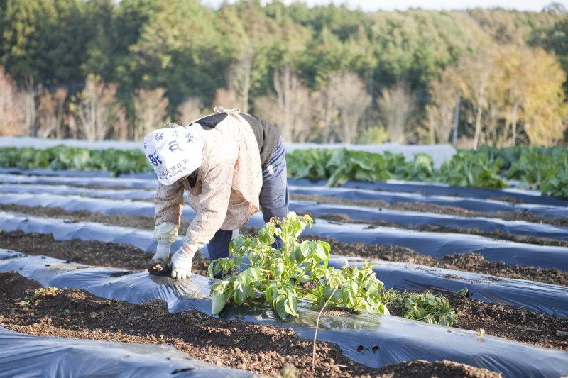 農家の後継ぎ問題
