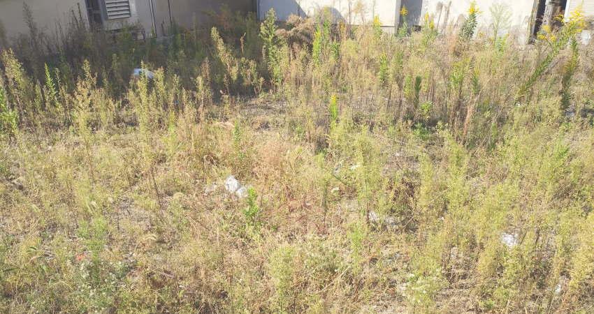 荒れ放題の実家の庭