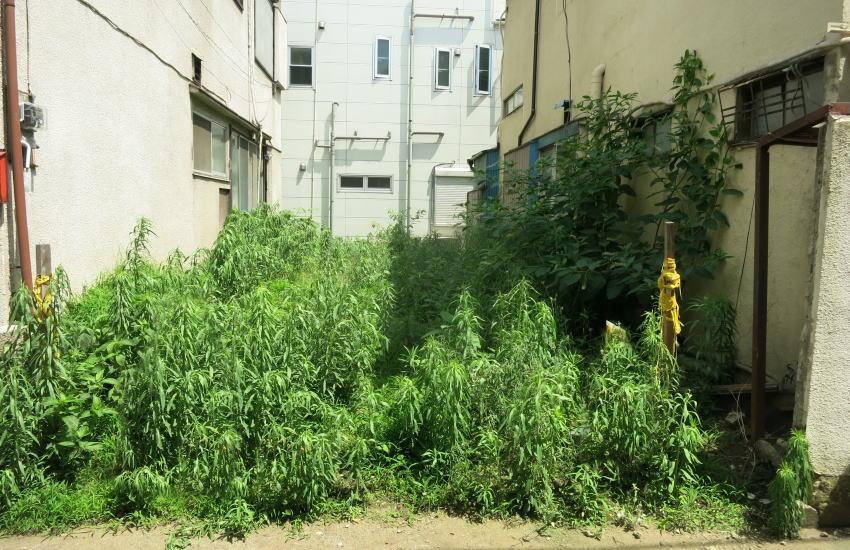 空き家の雑草